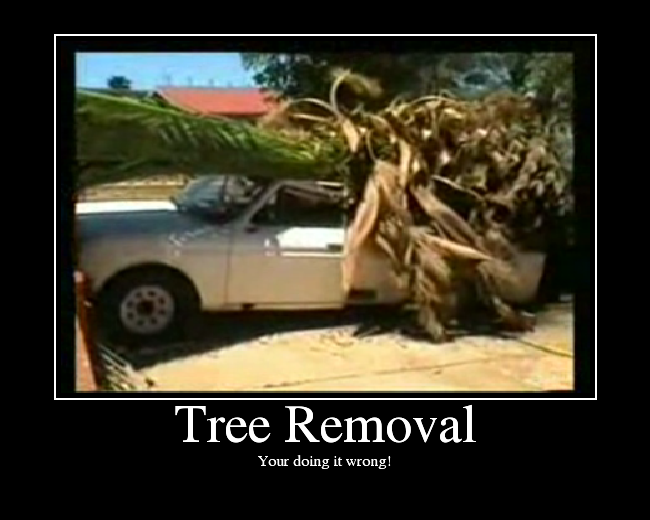 Tree Removal: Your're Doing It Wrong!